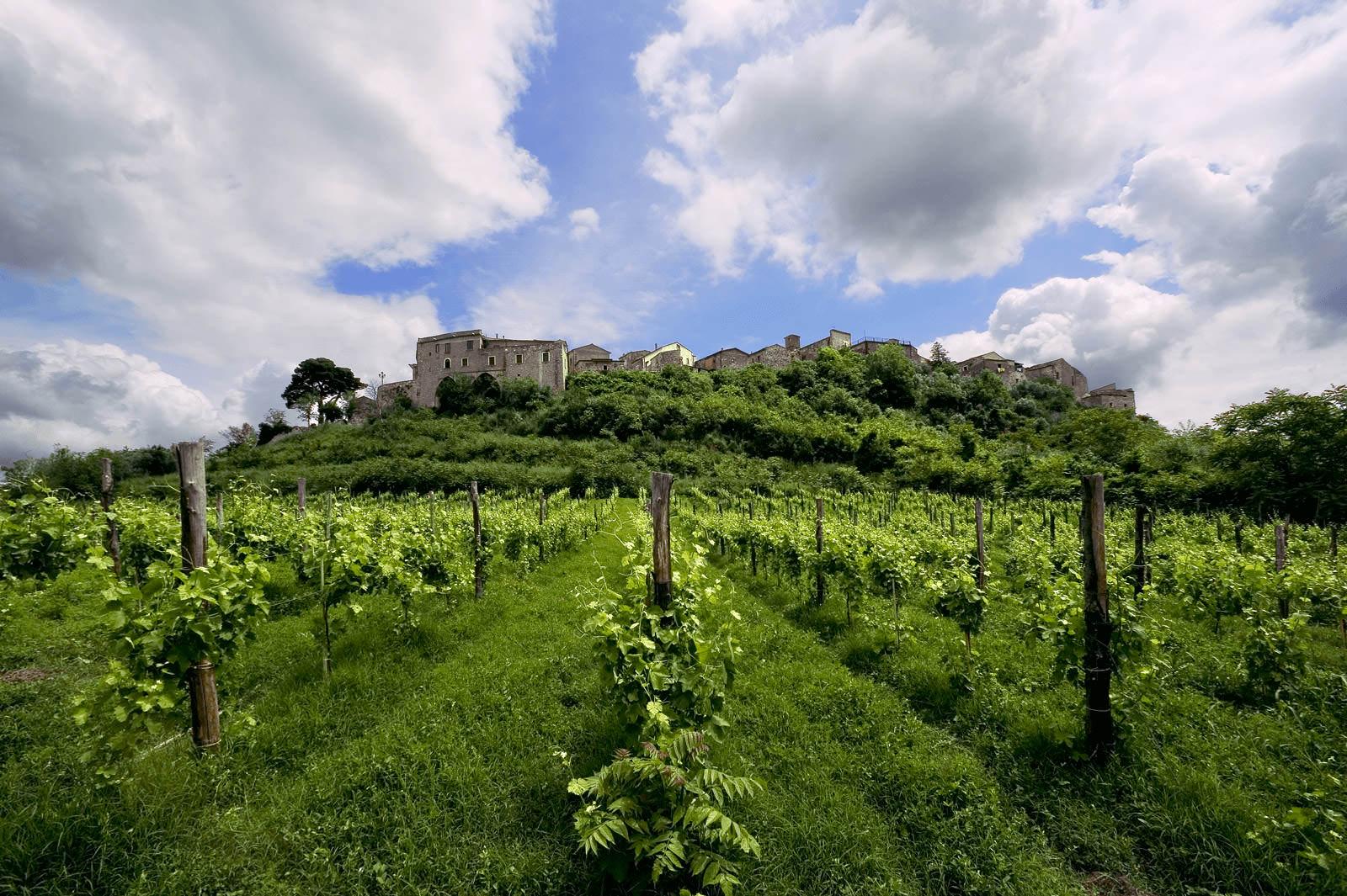 Feudi wijnen Campania Italie