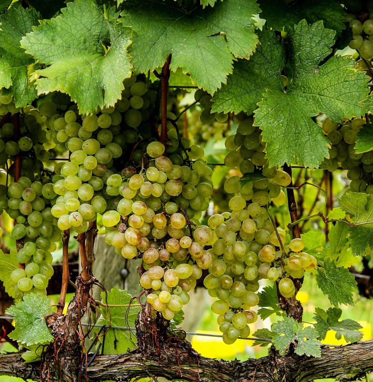 pasqua wijnhuis