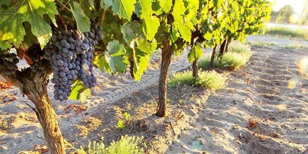 Het is een sterke link met het terroir en de natuur die u zult ontdekken in de wijnen van Les Embruns: lichtgevend, intens fruitig, ongelooflijk fris