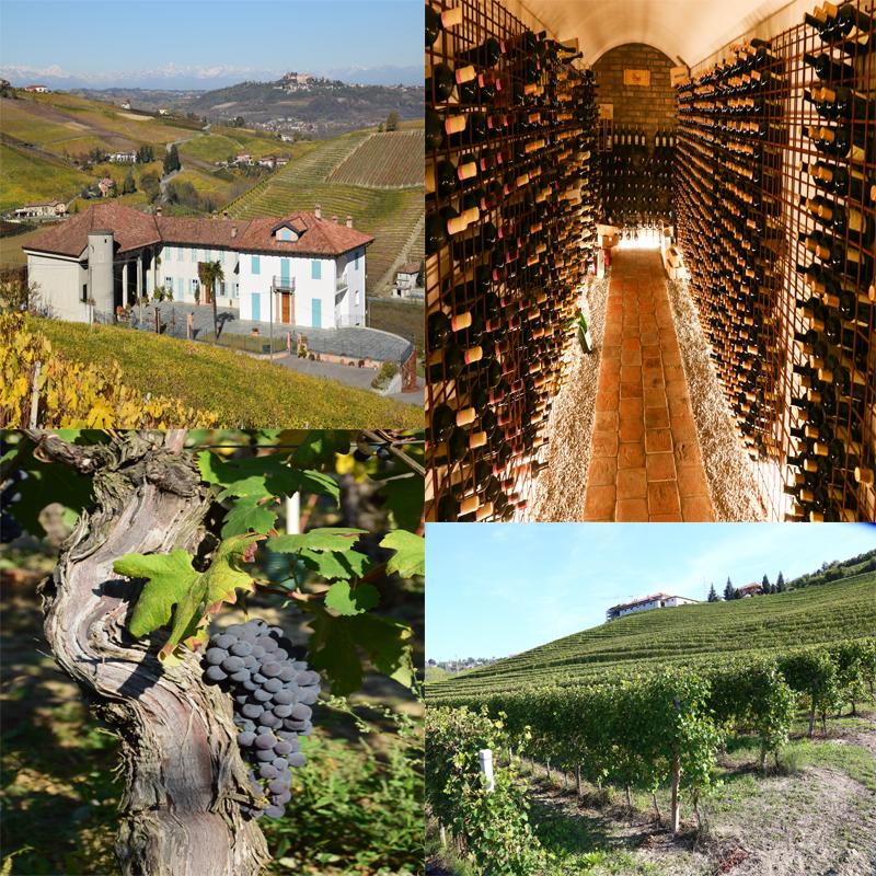 Prinsi wijn Italiaanse wijn