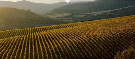 Torres wijngaarden