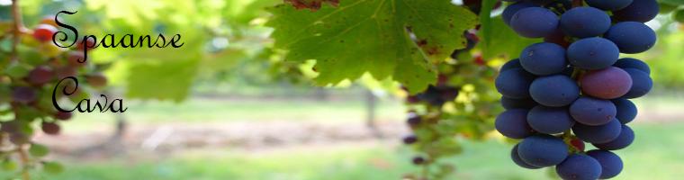 Cava is een mousserende wijn, deze wordt hoofdzakelijk geproduceerd in de Penedes ten zuidwesten van Barcelona, cava wordt van verschillende druivenrassen gemaakt maar traditioneel is deze van Macabeo, Xarel-lo en Parellada gemaakt.