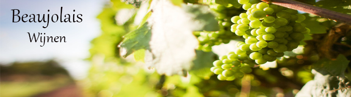 Beaujolais wijnen, de beaujolais is het meest zuidelijke gelegen wijngebied in de Bourgogne, geliefd om zijn gemoedelijke wijnen en vooral bekend om zijn Beaujolais Nouveau