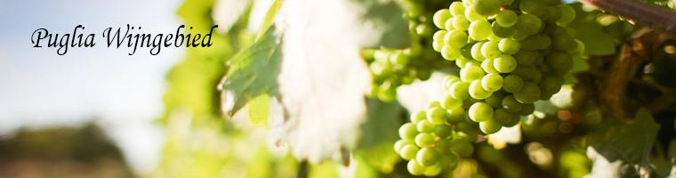 Wijnen uit het Italiaanse wijngebied
