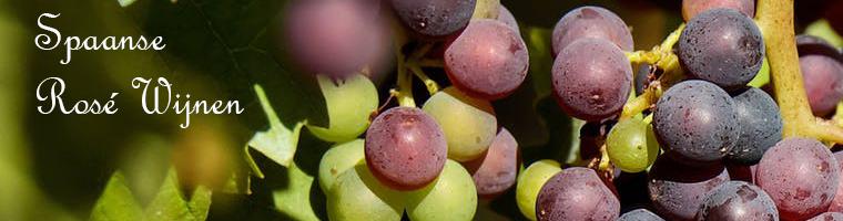 De Spaanse rosé wijnen zijn veelal donker van kleur en zijn bekend om hun fruitige smaken als  Framboos, Aardbei en rode bessen  De Tempranillo is de voornaamste druif om Rosé wijn te maken in Spanje, maar ook van de  Granacha en Cabernet Sauvignon wordt een goede Rosé gemaakt.